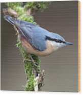 European Nuthatch Wood Print