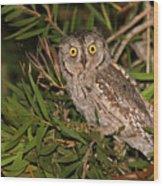 European Scops Owl  Wood Print