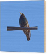 European Starling Trasparent Background Wood Print