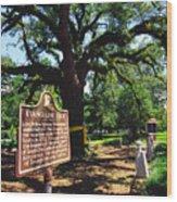 Evangeline Oak St Martinville Louisiana Wood Print