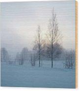 Evening Birches Wood Print