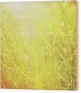 Evening Field Wood Print