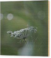 Evening Flower Wood Print