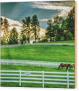 Evening Graze In Tennessee Wood Print