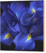 Evening Iris Wood Print