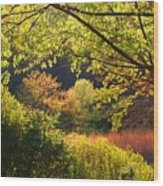 Evening Light 1 Wood Print