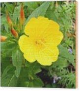 Yellow Sundrop Wood Print