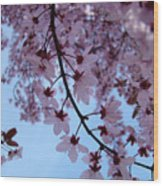 Evening Sky Pink Blossoms Art Prints Canvas Spring Baslee Troutman Wood Print