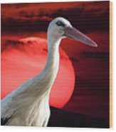 Evening Stork  Wood Print