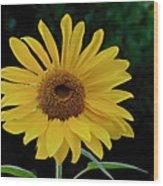 Evening Sunflower Wood Print