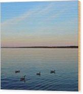 Evening Swimming Geese Three  Wood Print