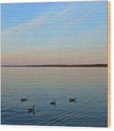 Evening Swimming Geese Two  Wood Print