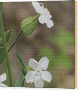 Evening Wildflower Wood Print