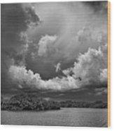 Everglades 0257bw Wood Print