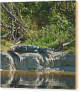 Everglades Crocodile Wood Print