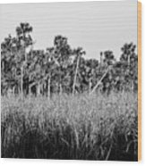 Everglades Grasses And Palm Trees 2 Wood Print