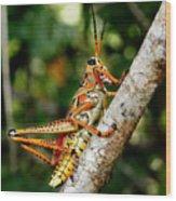 Everglades Grasshopper Wood Print