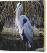 Everglades Heron Wood Print