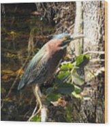 Everglades Inhabitant Wood Print