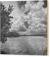 Everglades Lake - 0278abw Wood Print