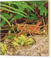 Everglades Locust Wood Print
