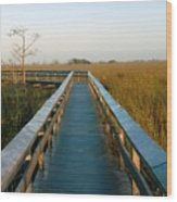 Everglades National Park Wood Print