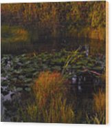 Everglades Pond Wood Print