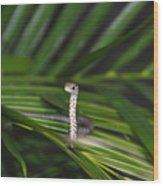 Everglades Racer Wood Print