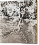 Everglades Reflections Wood Print