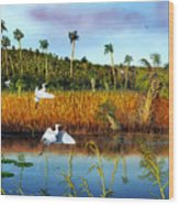 Everglades Sanctuary Wood Print