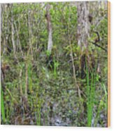 Everglades Swamp Two Wood Print
