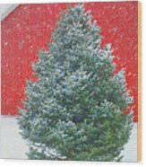 Evergreen In Winter #1 Wood Print