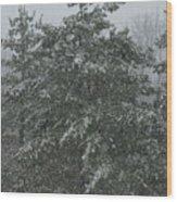 Evergreen Snowfall Wood Print