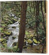 Evergreen Stream Ravine Wood Print