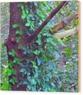 Evergreen Tree With Green Vine Wood Print