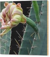 Every Cactus Flower Has It's Thorns  Wood Print
