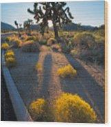 Every Moment Joshua Tree National Park Wood Print