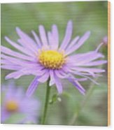 Everything Is Coming Up Daisies Wood Print
