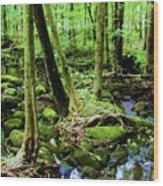 Evolution Of A Forest In Spring  Wood Print