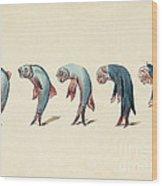 Evolution Of Fish Into Old Man, C. 1870 Wood Print