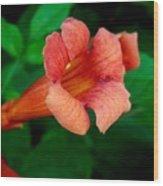 Evolution Of The Trumpet Flower II Wood Print