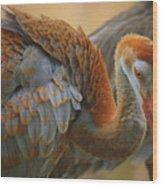 Evolving Sandhill Crane Beauty Wood Print