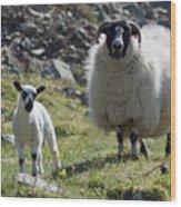 Ewe And Lamb No2 Wood Print
