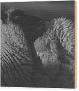 Ewe Talk A Wood Print