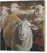 Ewes In The Paddock Wood Print