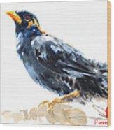 Myna Bird From Thailand Wood Print