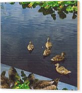 Exotic Birds Of America Ducks In A Pond Wood Print