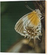 Exotic Butterfly On Tree Bark Wood Print