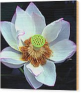 Exotic Lotus Wood Print