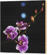 Exotic Orchid 6 Wood Print